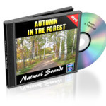 Autumn_In_The_Forest